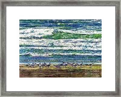 Caspian Terns By The Ocean Framed Print