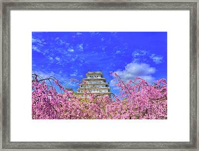 Castle's Blossom Framed Print