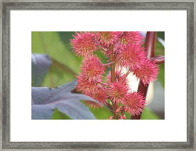 Framed Print featuring the photograph Castor Bean Flowers by Carrie Maurer