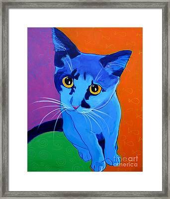 Cat - Kitten Blue Framed Print