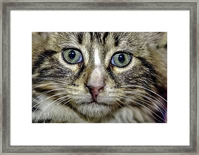 Cat 1 Framed Print by Isam Awad