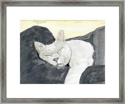 Cat #3 Framed Print by Kurt Prather
