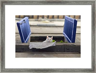 What You Looking' At, Cat? Framed Print