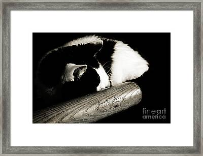 Cat And Bat Framed Print