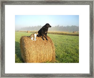 Cat And Dog On Hay Bale Framed Print