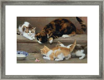 Cat And Kittens Chasing A Mouse   Framed Print by Rosa Jameson
