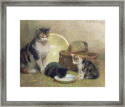 Cat And Kittens Framed Print by Walter Frederick Osborne