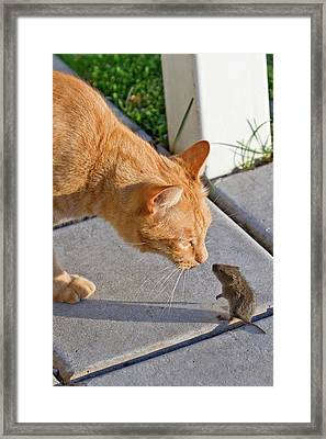 Framed Print featuring the photograph Cat And Mouse by Wesley Aston