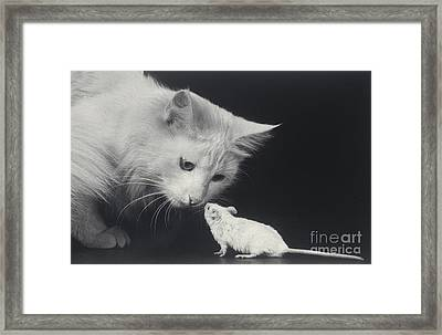 Cat And Mouse Framed Print by Ylla