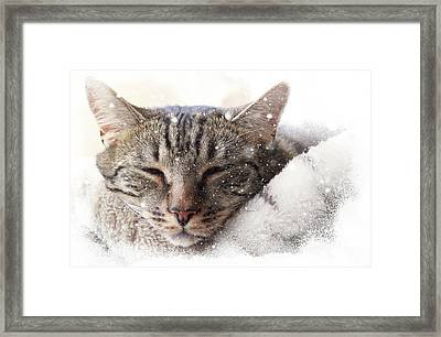 Cat And Snow Framed Print