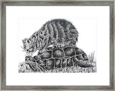 Cat And Turtle Framed Print