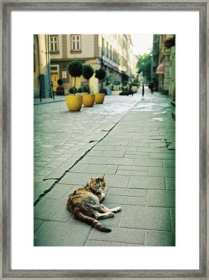Cat Framed Print by Anton Popov