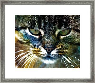 Cat Art Framed Print