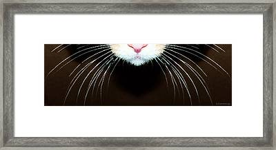 Cat Art - Super Whiskers Framed Print by Sharon Cummings