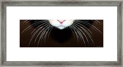 Cat Art - Super Whiskers Framed Print by Sharon Cummings