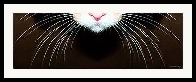 Striped Cat Framed Prints