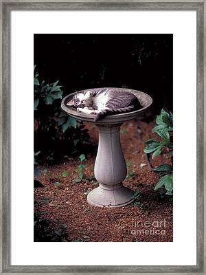 Cat Asleep In A Birdbath Framed Print by John Kaprielian