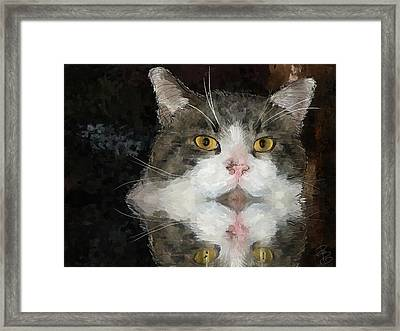 Cat At The Table Framed Print