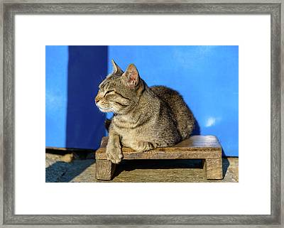 Cat Basking In The Sun Framed Print by Dutourdumonde Photography
