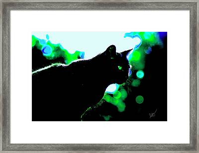 Cat Bathed In Green Light Framed Print by Gina O'Brien