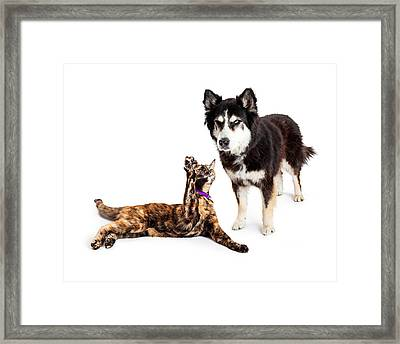 Cat Batting At Angry Dog Framed Print by Susan Schmitz