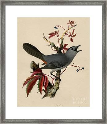 Cat Bird Framed Print