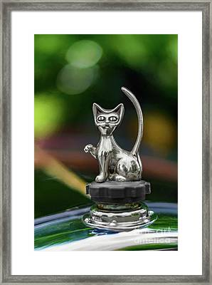 Cat Bonnet Mascot Framed Print