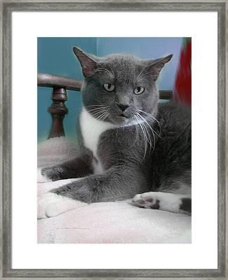 Cat Boticas Portrait  Framed Print