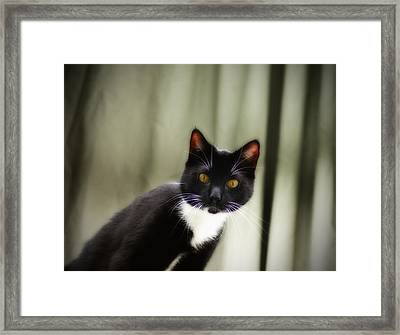 Cat Cat Framed Print by Bill Cannon
