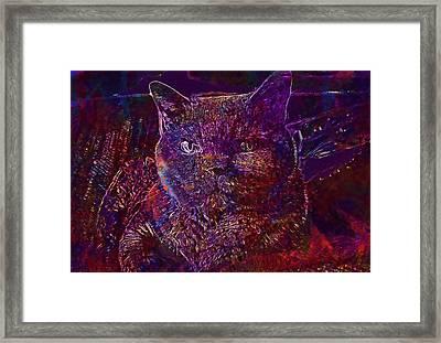 Framed Print featuring the digital art Cat Cat S Eyes Eye Animal Pet  by PixBreak Art