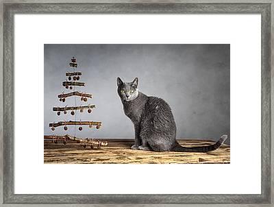 Cat Christmas Framed Print