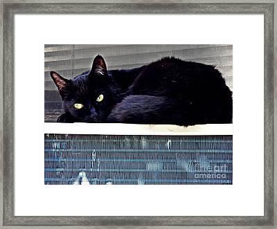 Cat Conditioner Framed Print