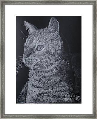Cat Framed Print by Cybele Chaves