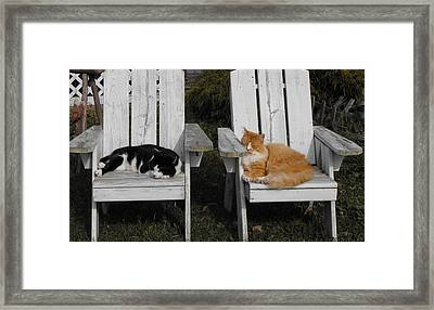 Cat Days Of Summer Framed Print by David and Lynn Keller