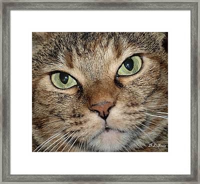 Cat Framed Print by Dennis Stein