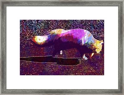 Cat Domestic Cat European Shorthair  Framed Print