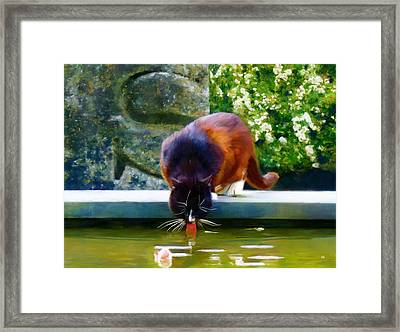 Cat Drinking In Picturesque Garden Framed Print by Menega Sabidussi
