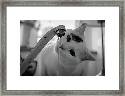 Cat Drinking Water From Faucet Framed Print by A*k