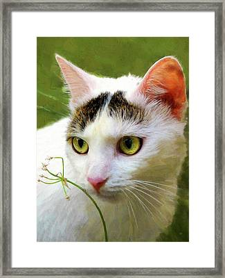 Cat Enjoying The Garden Framed Print by Menega Sabidussi