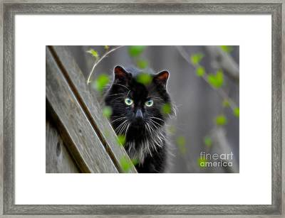 Cat Eyes Framed Print