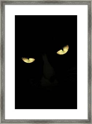 Cat Eyes II Framed Print