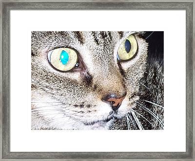 Cat Eyes Framed Print by Martha Hoskins