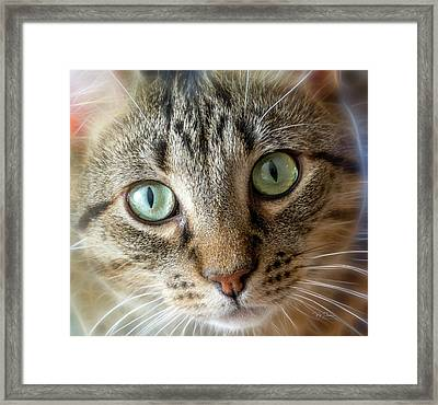 Cat Eyes With Glow Framed Print