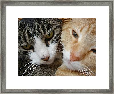 Framed Print featuring the digital art Cat Faces by Jana Russon