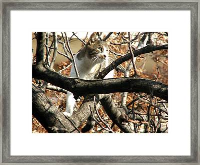 Cat Hunting Bird Framed Print