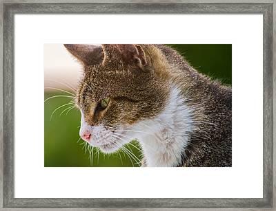 Cat Hunting Framed Print