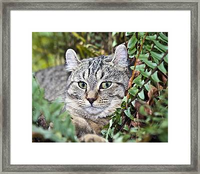 Cat In A Fern Framed Print by Susan Leggett