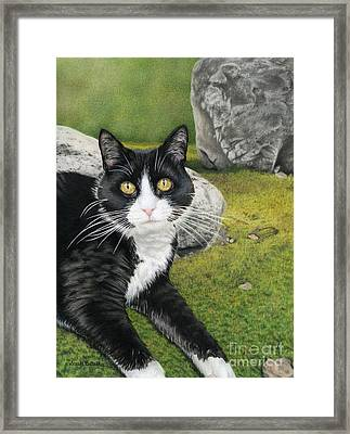 Cat In A Rock Garden Framed Print