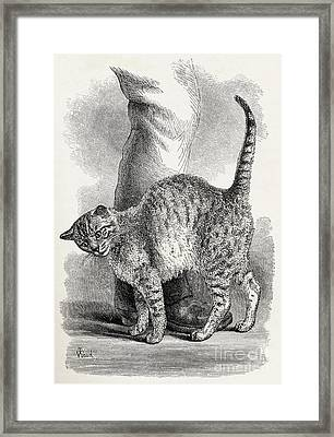 Cat In An Affectionate Frame Of Mind Framed Print