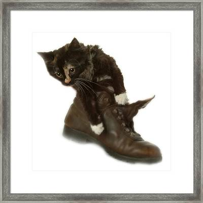 Cat In Boot Framed Print